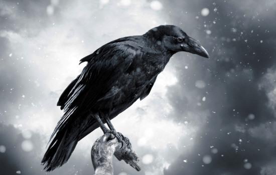 Чёрные вороны во сне